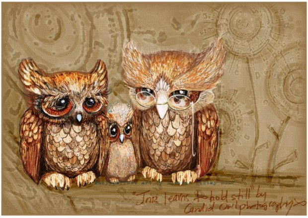 manysparrows art owls (19)